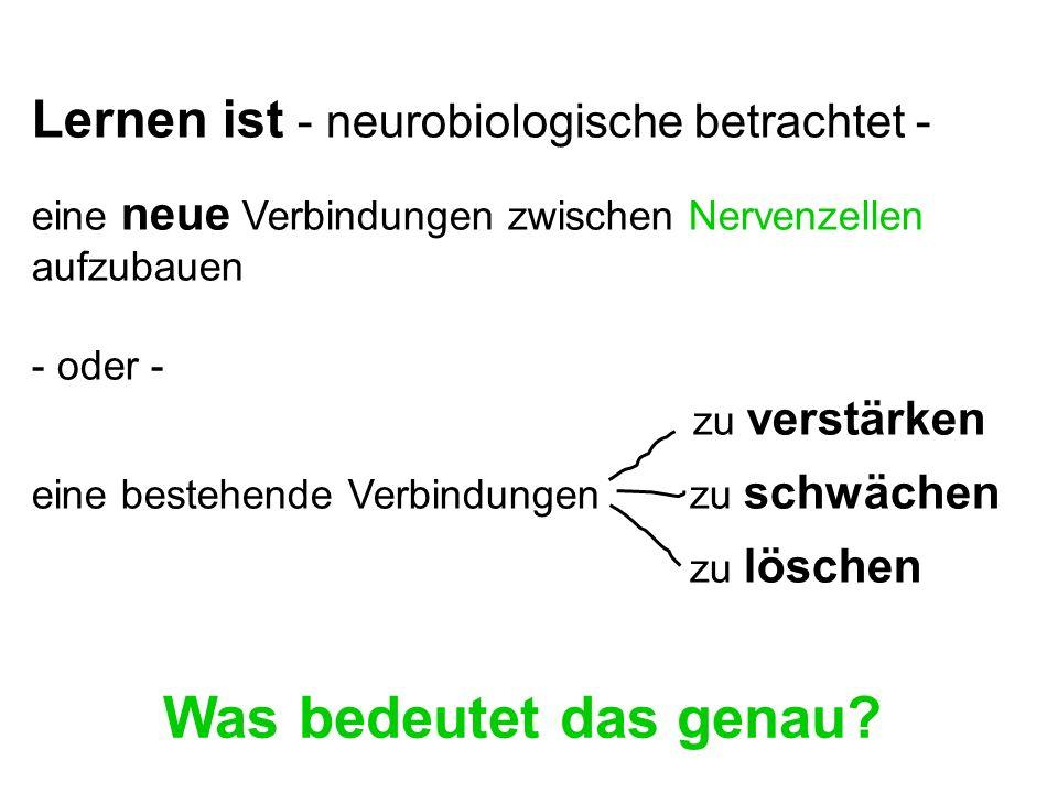 Was bedeutet das genau Lernen ist - neurobiologische betrachtet -