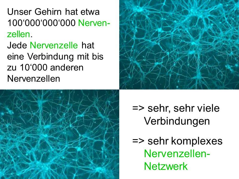 => sehr, sehr viele Verbindungen => sehr komplexes Nervenzellen-