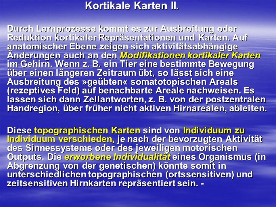 Kortikale Karten II.