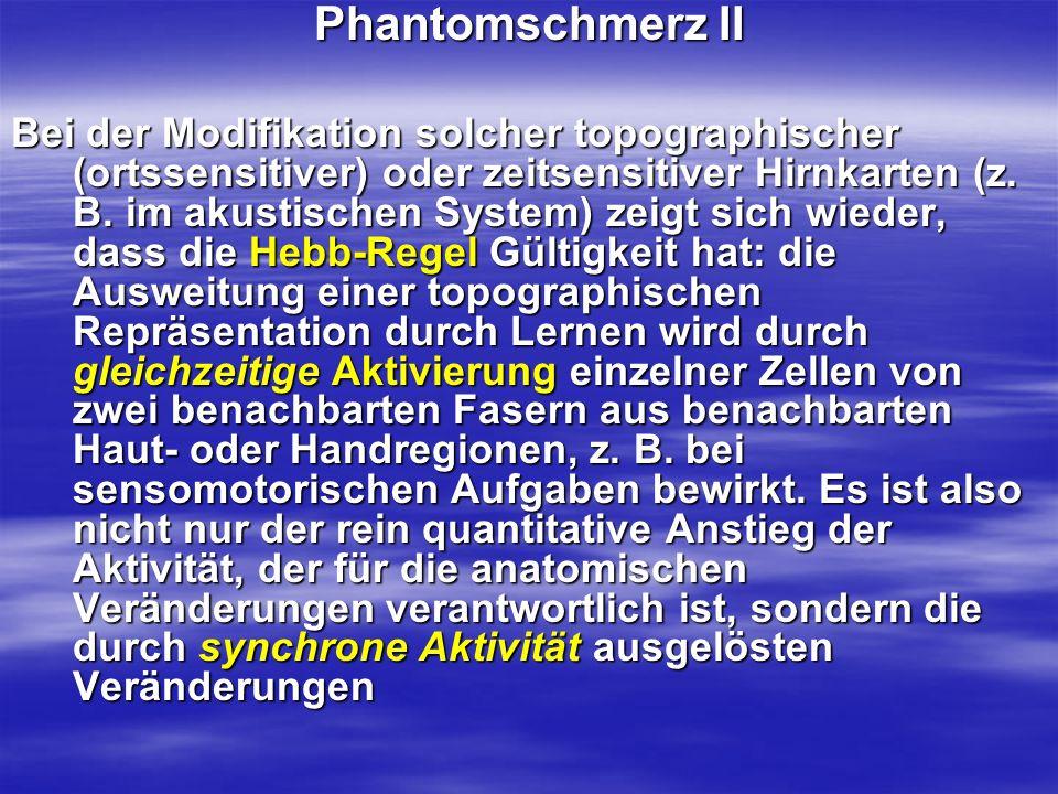 Phantomschmerz II