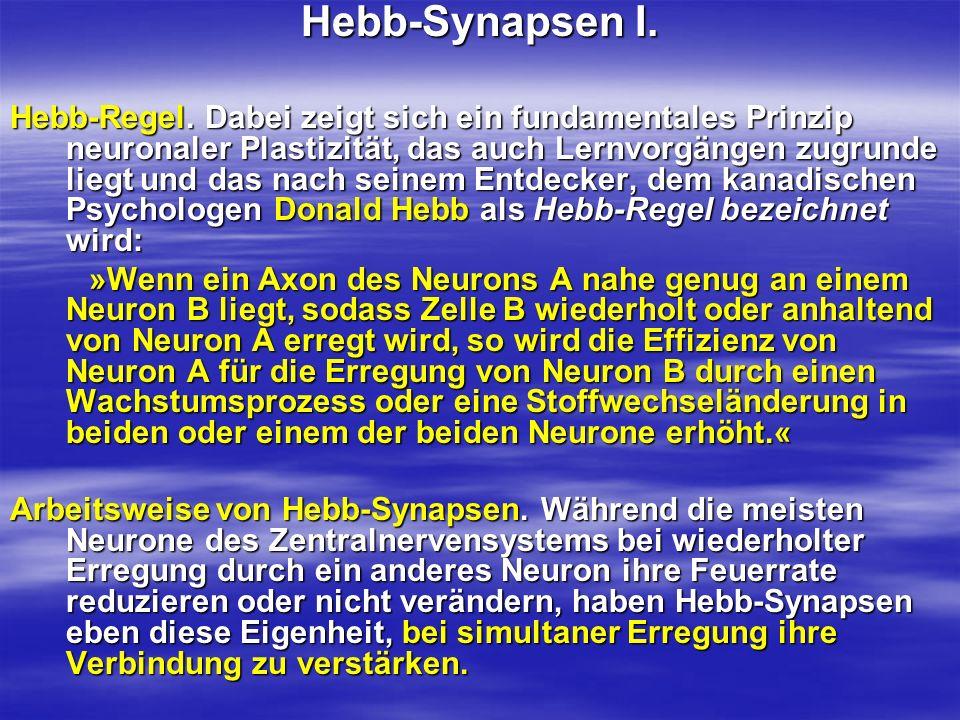 Hebb-Synapsen I.