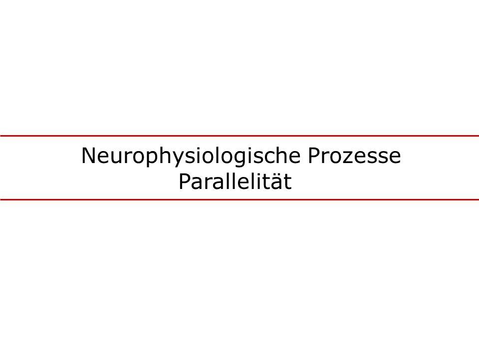 Neurophysiologische Prozesse