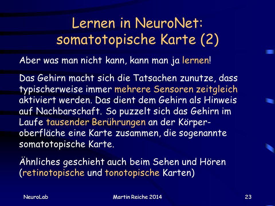 Lernen in NeuroNet: somatotopische Karte (2)