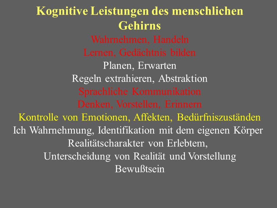 Kognitive Leistungen des menschlichen