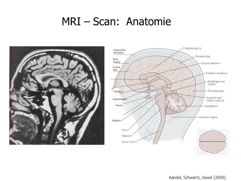 MRI – Scan: Anatomie Kandel, Schwartz, Jessel (2000)