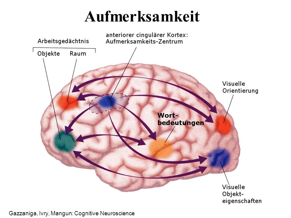 Gazzaniga, Ivry, Mangun: Cognitive Neuroscience