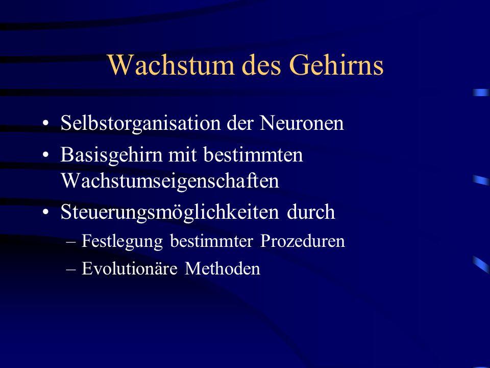Wachstum des Gehirns Selbstorganisation der Neuronen