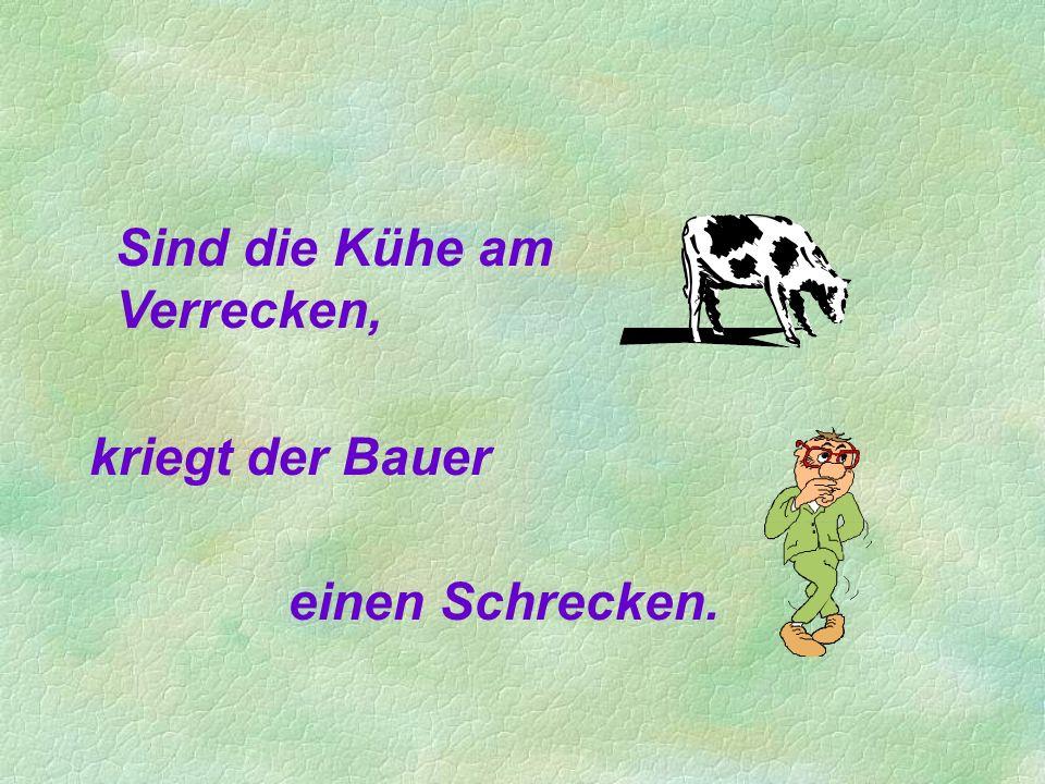 Sind die Kühe am Verrecken,