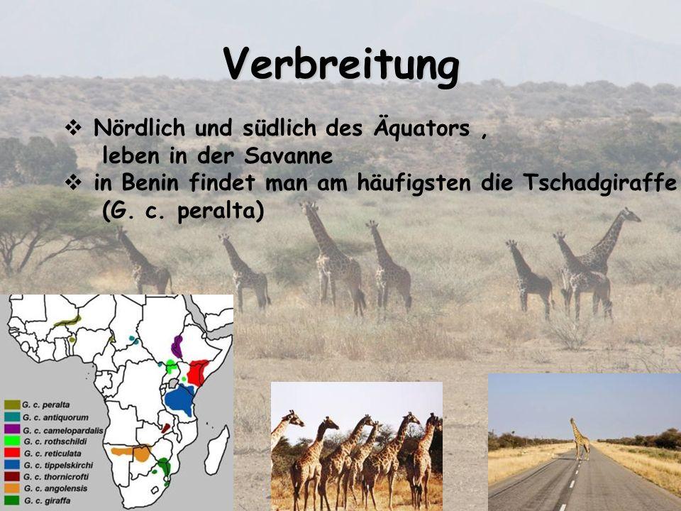 Verbreitung Nördlich und südlich des Äquators , leben in der Savanne