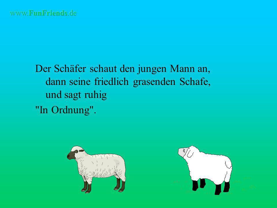 Der Schäfer schaut den jungen Mann an, dann seine friedlich grasenden Schafe, und sagt ruhig