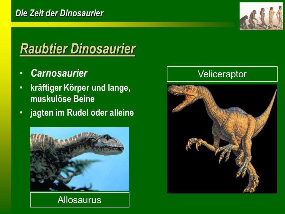 Raubtier Dinosaurier Carnosaurier Veliceraptor