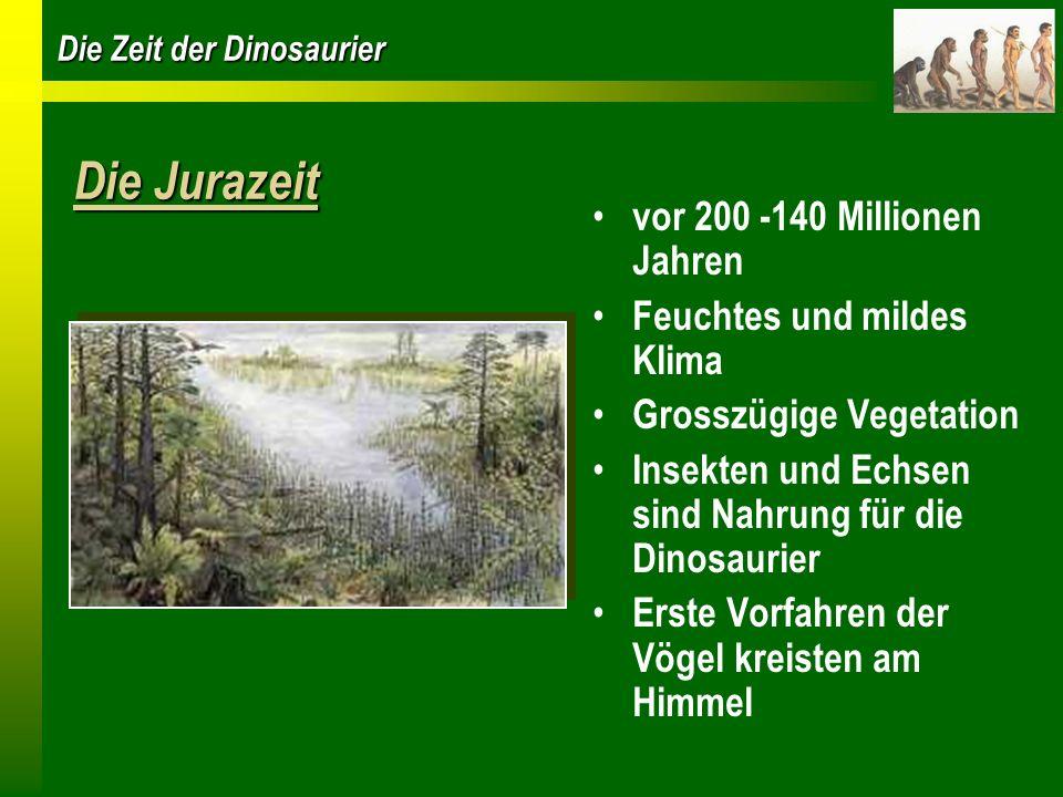 Die Jurazeit vor 200 -140 Millionen Jahren Feuchtes und mildes Klima