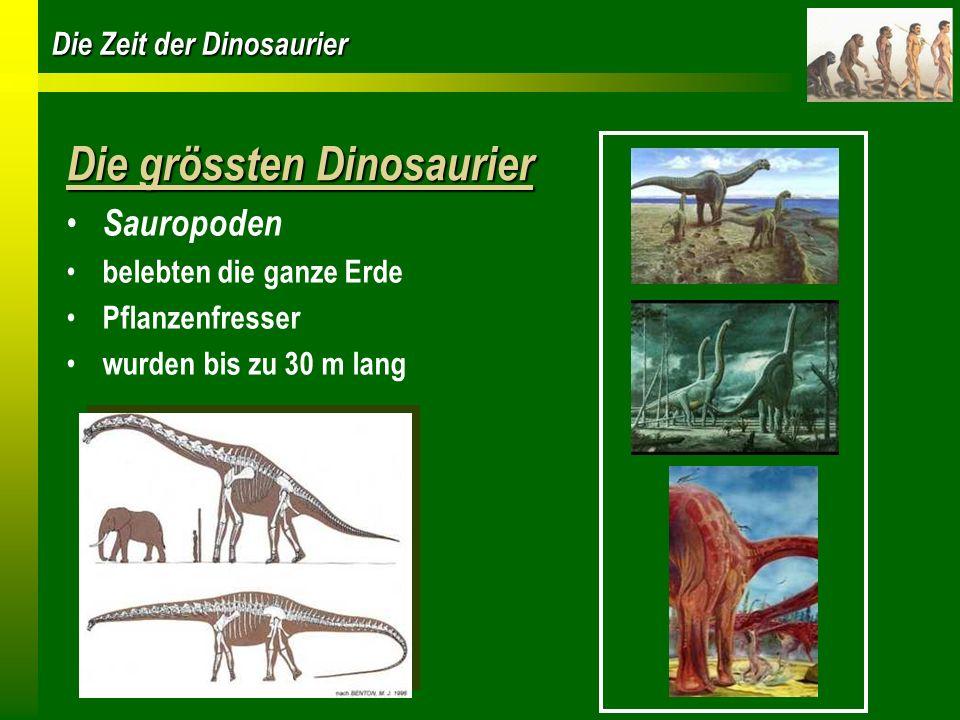 Die grössten Dinosaurier