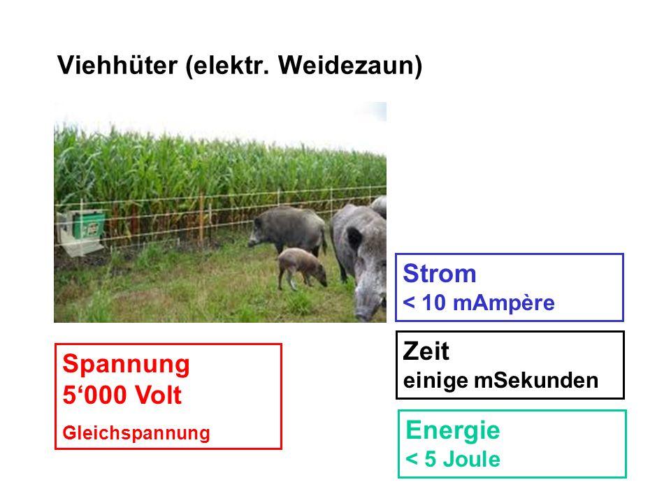 Viehhüter (elektr. Weidezaun)
