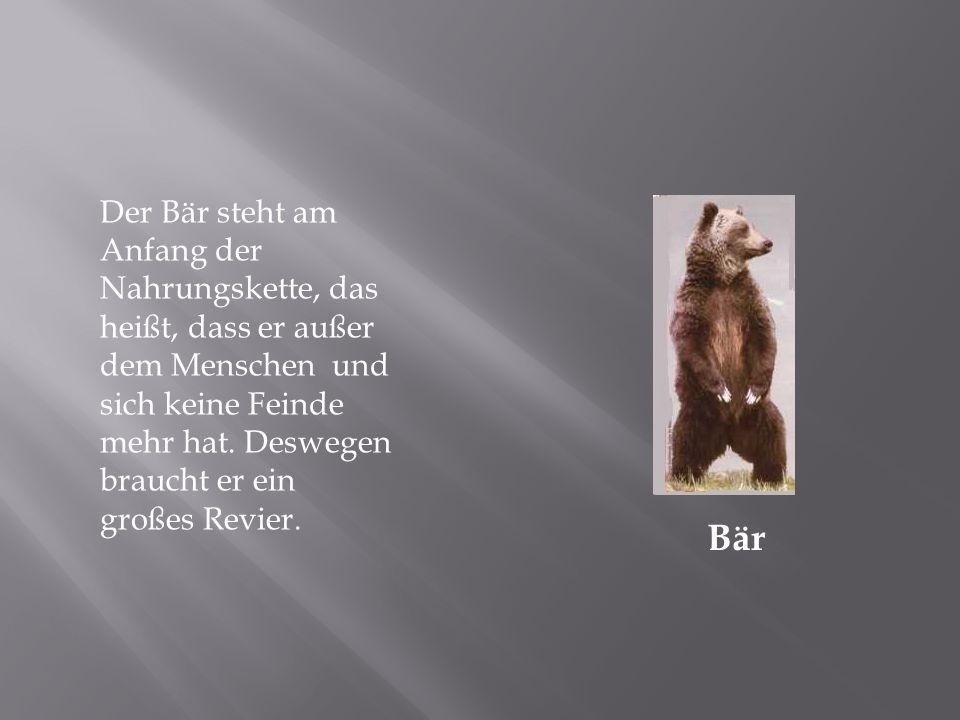 Der Bär steht am Anfang der Nahrungskette, das heißt, dass er außer dem Menschen und sich keine Feinde mehr hat. Deswegen braucht er ein großes Revier.