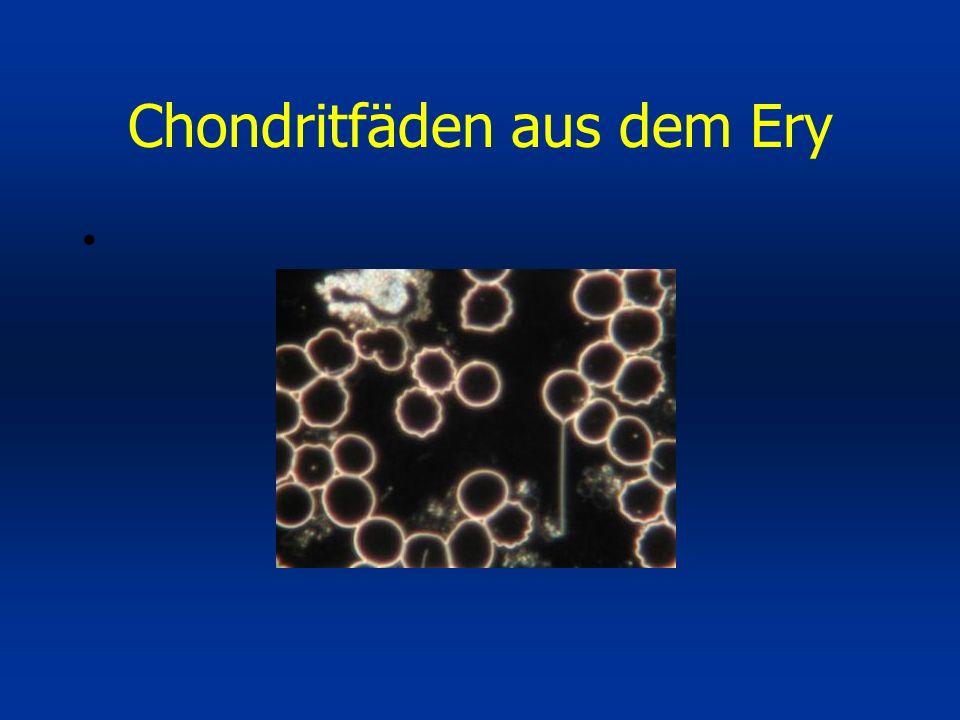 Chondritfäden aus dem Ery