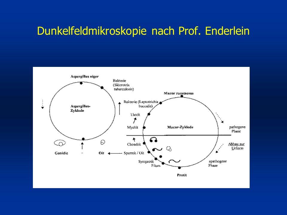 Dunkelfeldmikroskopie nach Prof. Enderlein