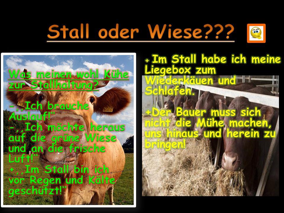 Stall oder Wiese Was meinen wohl Kühe zur Stallhaltung