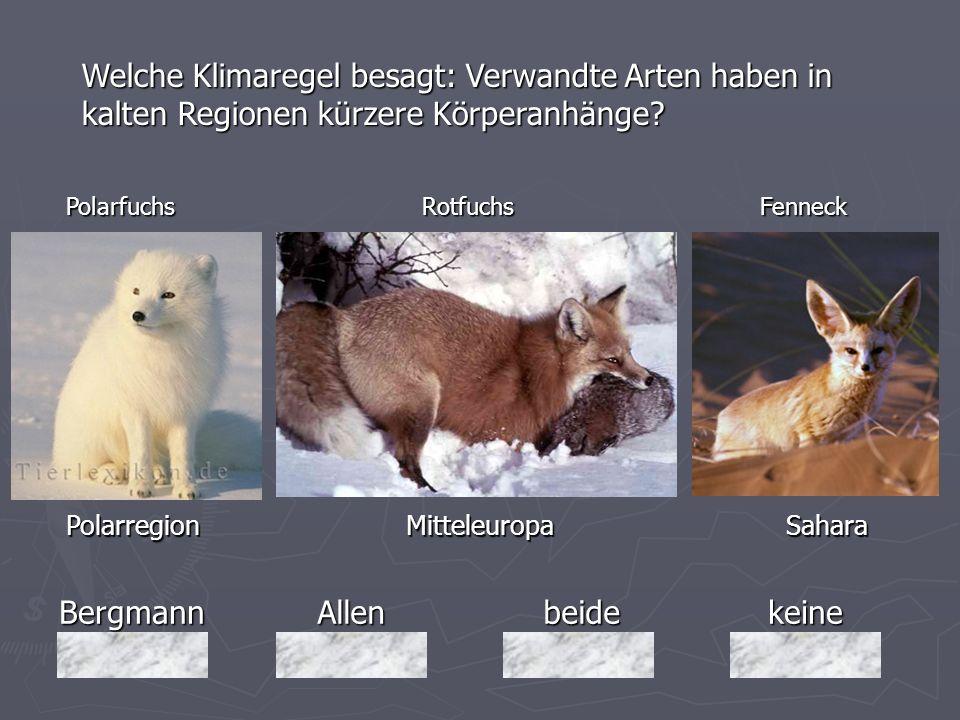Welche Klimaregel besagt: Verwandte Arten haben in kalten Regionen kürzere Körperanhänge
