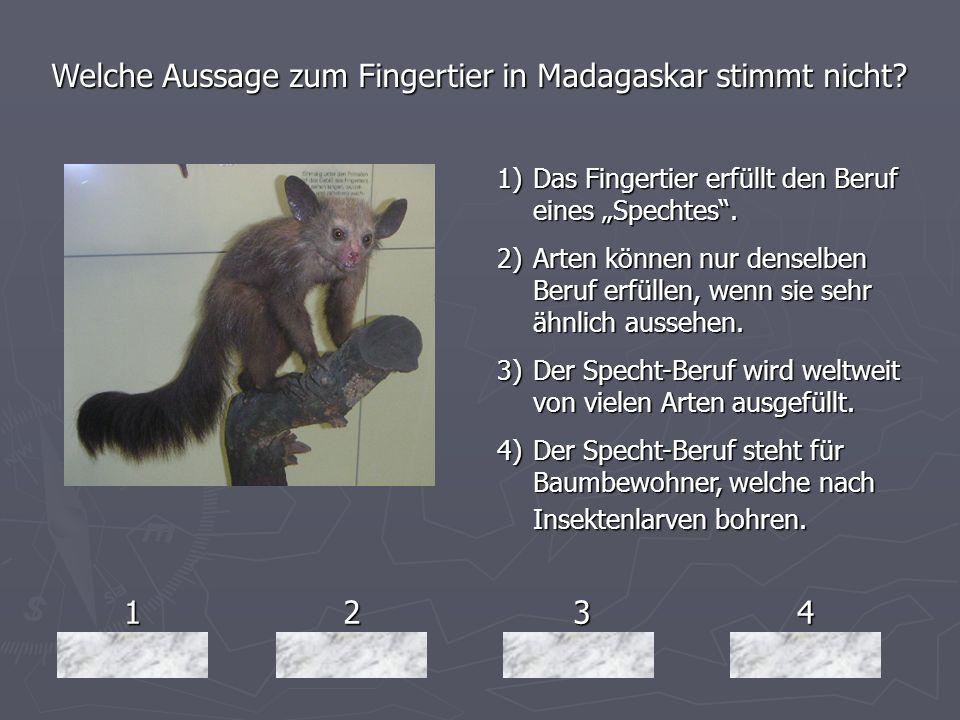 Welche Aussage zum Fingertier in Madagaskar stimmt nicht
