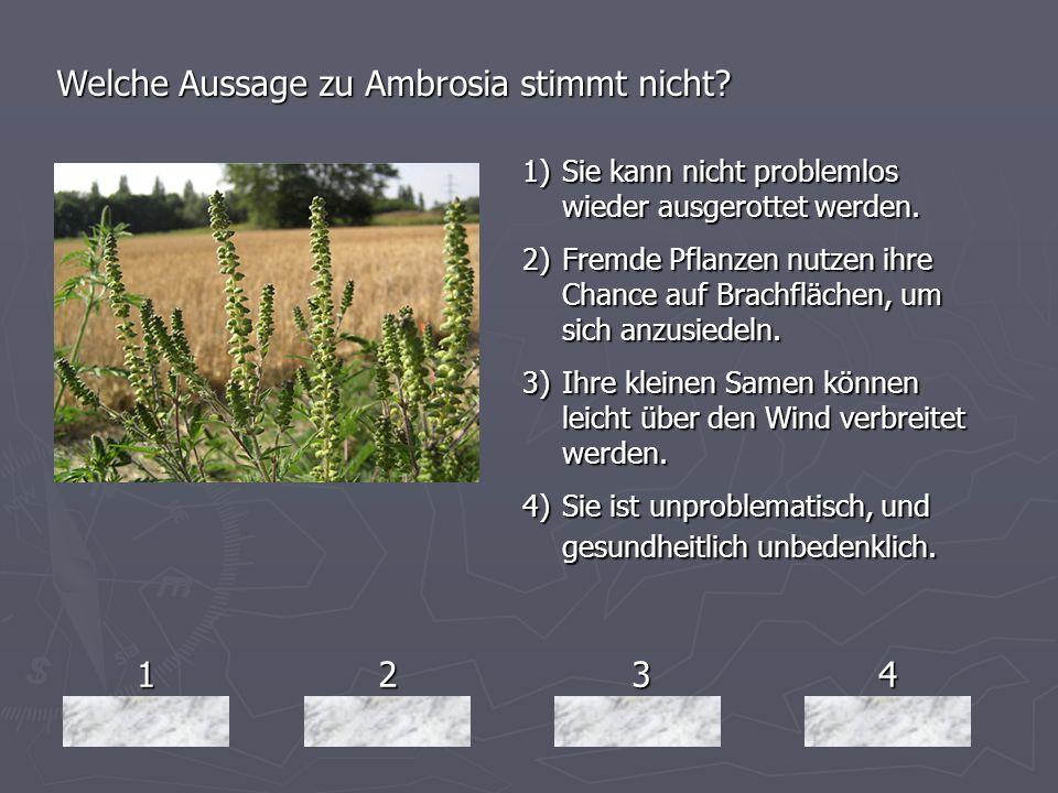Welche Aussage zu Ambrosia stimmt nicht