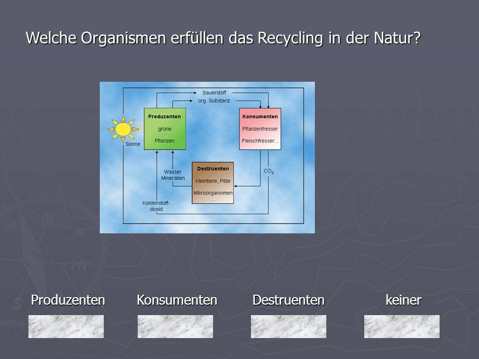 Welche Organismen erfüllen das Recycling in der Natur