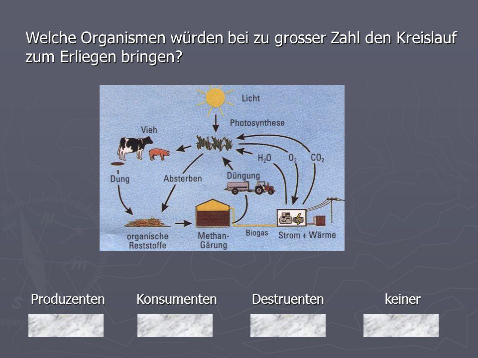 Welche Organismen würden bei zu grosser Zahl den Kreislauf zum Erliegen bringen