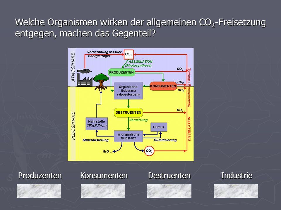 Welche Organismen wirken der allgemeinen CO2-Freisetzung entgegen, machen das Gegenteil