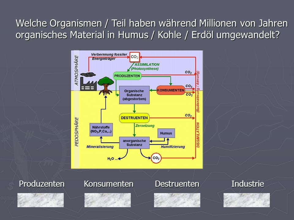 Welche Organismen / Teil haben während Millionen von Jahren organisches Material in Humus / Kohle / Erdöl umgewandelt