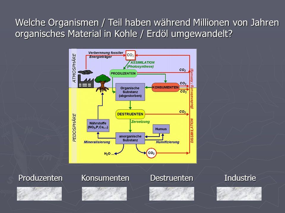Welche Organismen / Teil haben während Millionen von Jahren organisches Material in Kohle / Erdöl umgewandelt