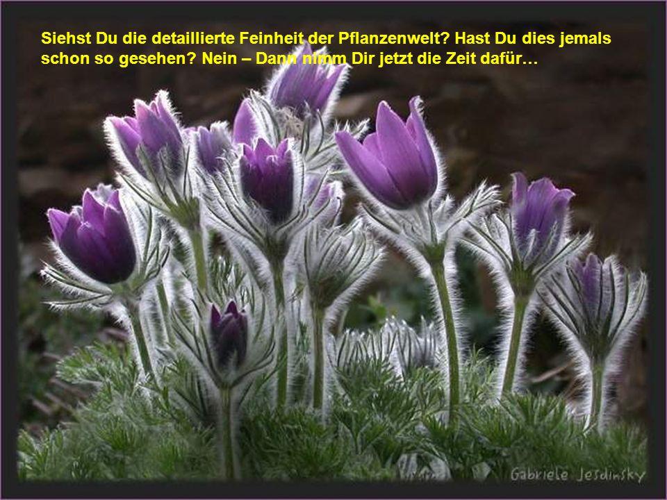 Siehst Du die detaillierte Feinheit der Pflanzenwelt