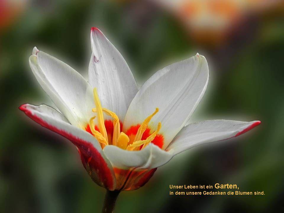 Unser Leben ist ein Garten,
