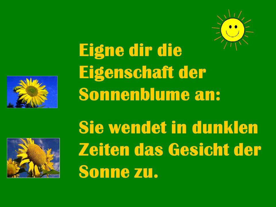 Eigne dir die Eigenschaft der Sonnenblume an: