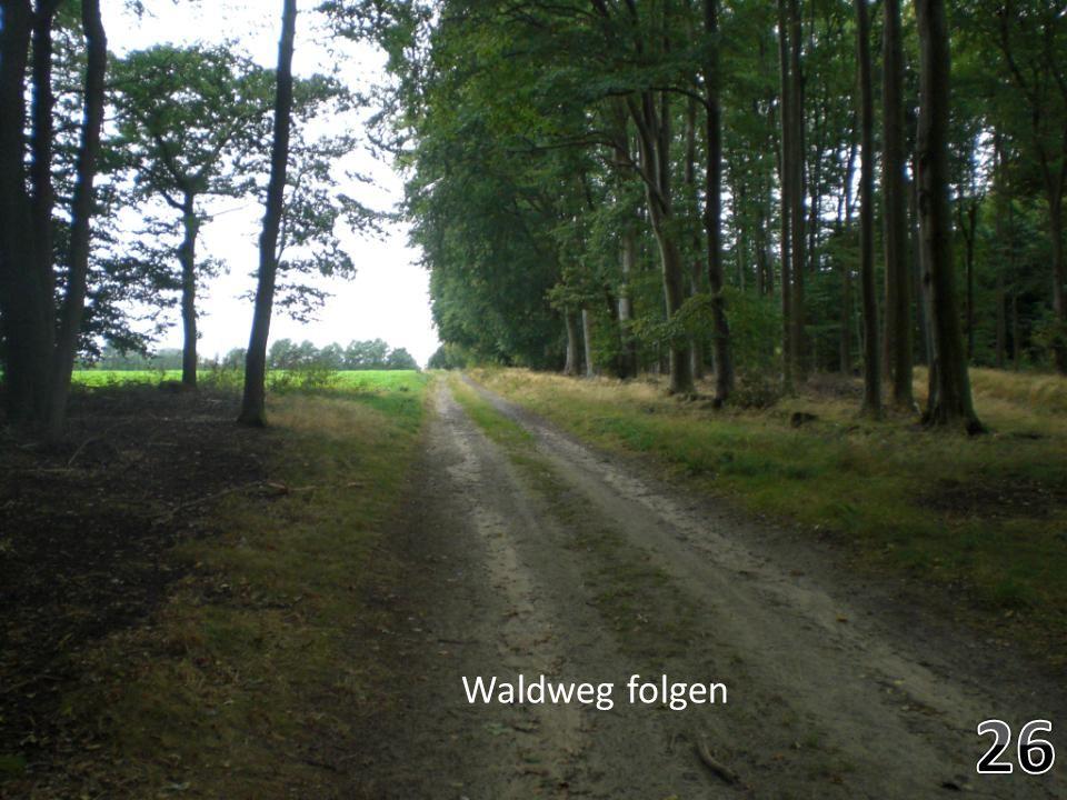 Durch den Wald gehen- banous bilder