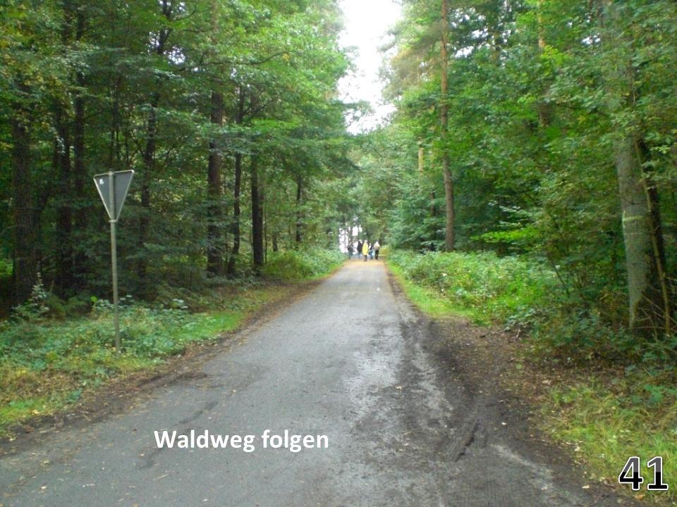 Waldweg folgen 41