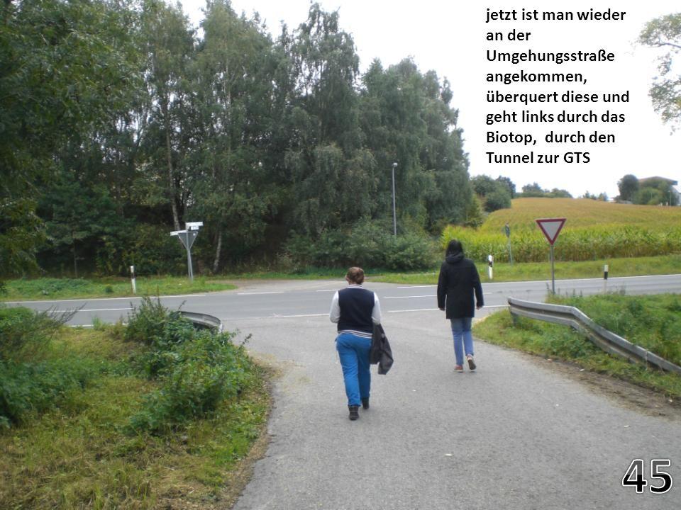 jetzt ist man wieder an der Umgehungsstraße angekommen, überquert diese und geht links durch das Biotop, durch den Tunnel zur GTS