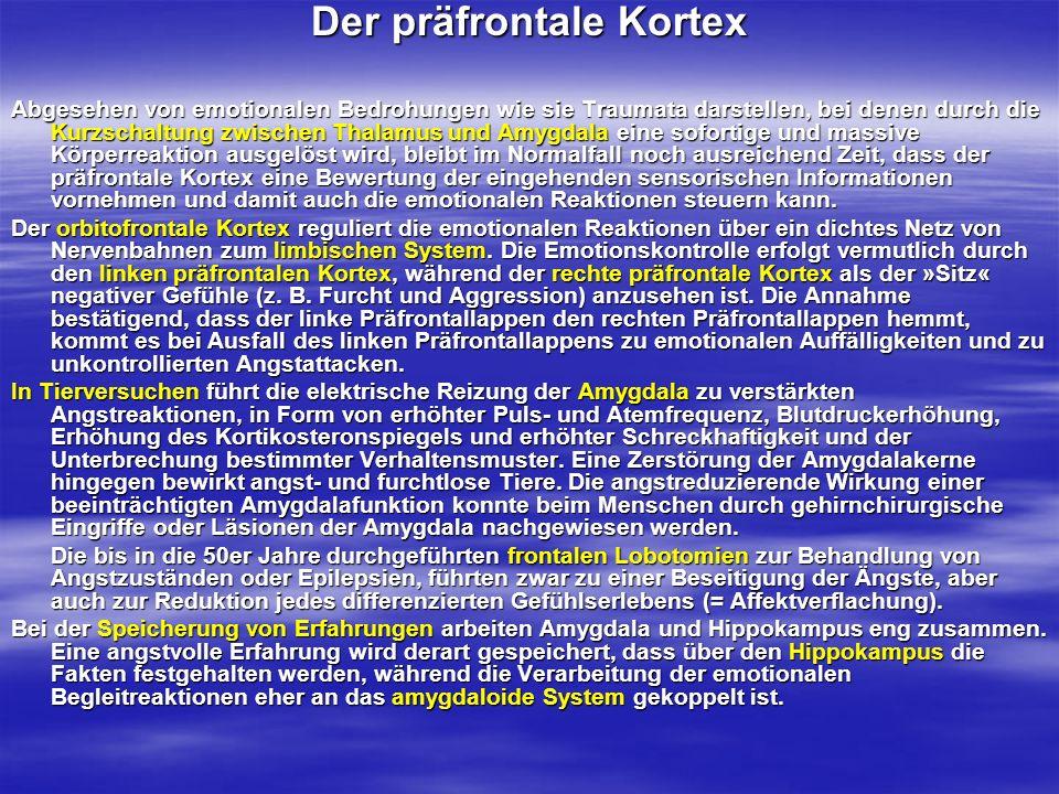 Der präfrontale Kortex