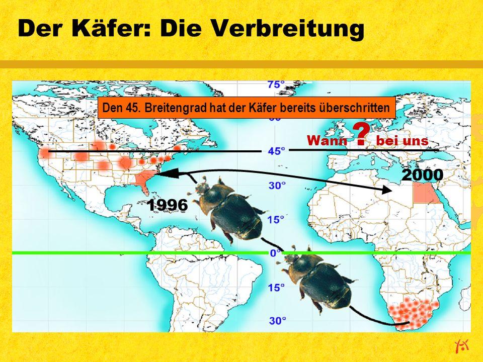 Der Käfer: Die Verbreitung