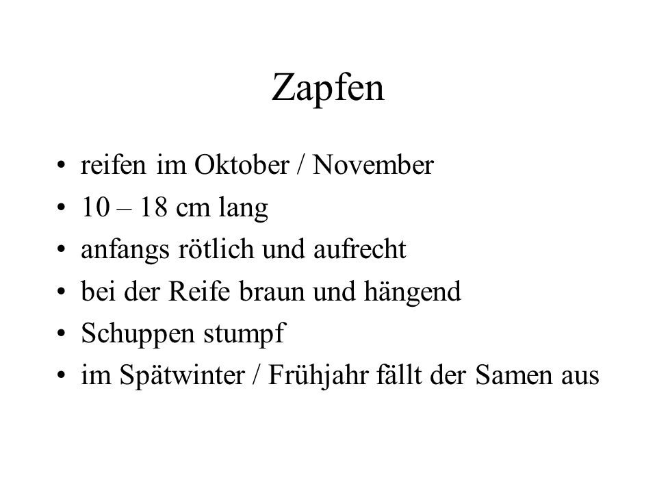 Zapfen reifen im Oktober / November 10 – 18 cm lang