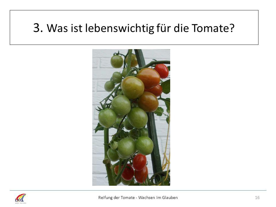 3. Was ist lebenswichtig für die Tomate