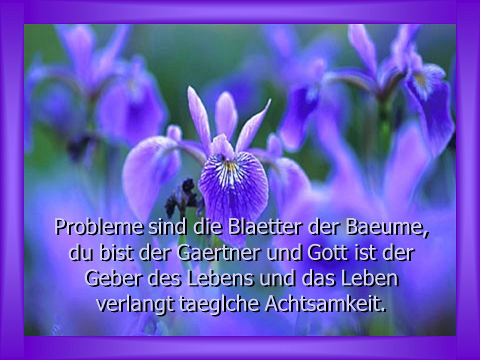 Probleme sind die Blaetter der Baeume, du bist der Gaertner und Gott ist der Geber des Lebens und das Leben verlangt taeglche Achtsamkeit.