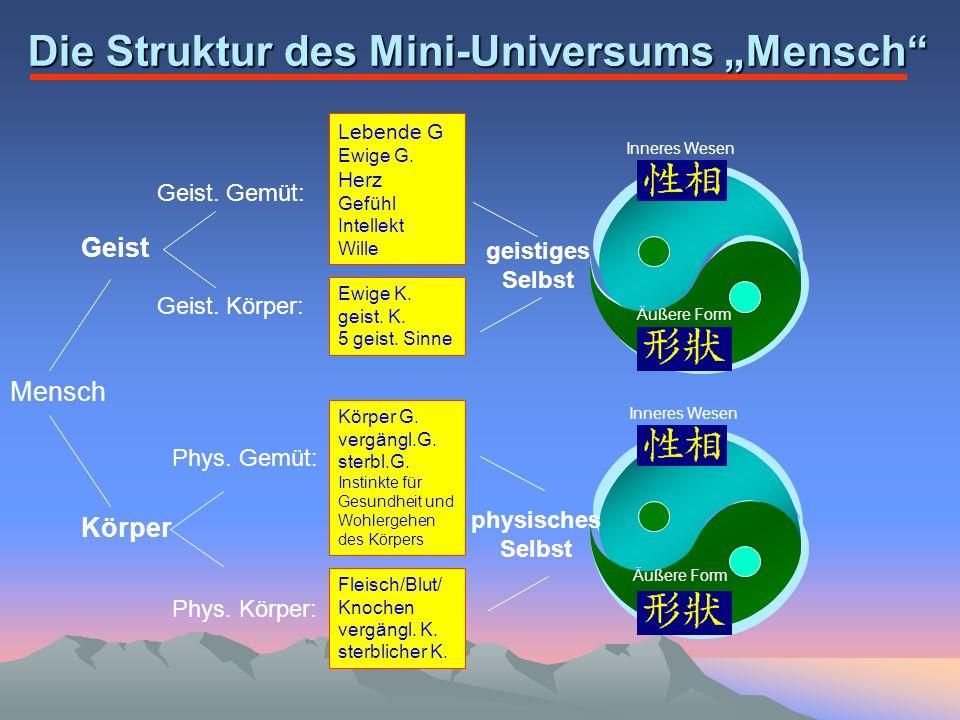 """Die Struktur des Mini-Universums """"Mensch"""