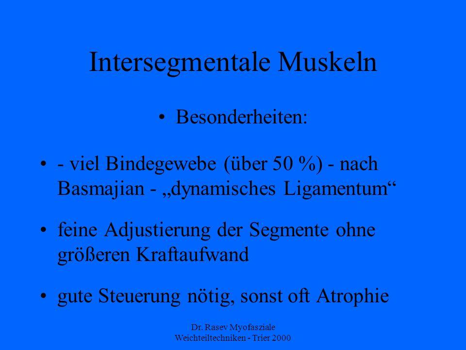 Intersegmentale Muskeln
