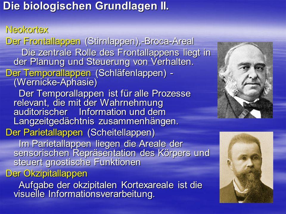 Die biologischen Grundlagen II.