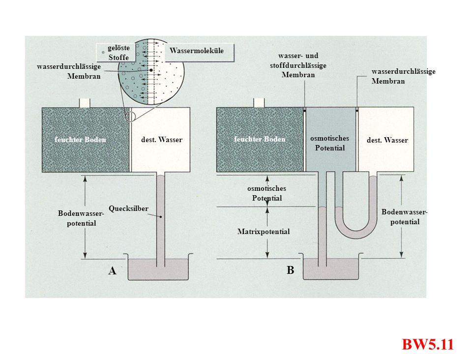 BW5.11 A B gelöste Stoffe Wassermoleküle