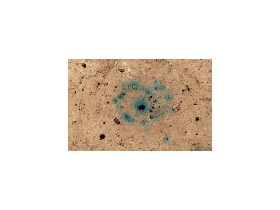 Biogene Makroporen im Boden: Regenwurmgänge.