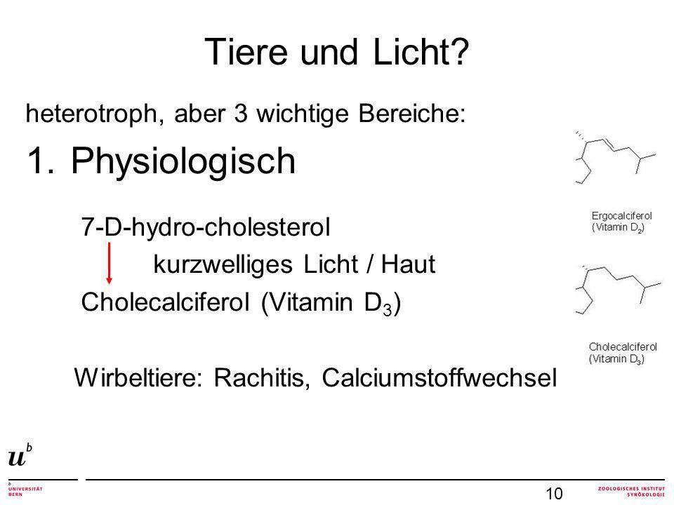 Tiere und Licht Physiologisch heterotroph, aber 3 wichtige Bereiche: