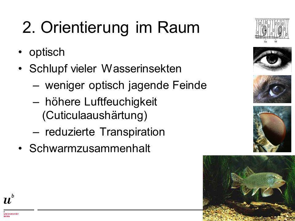 2. Orientierung im Raum optisch Schlupf vieler Wasserinsekten