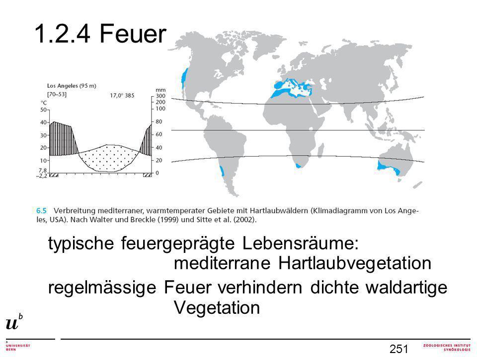 1.2.4 Feuer typische feuergeprägte Lebensräume: mediterrane Hartlaubvegetation.