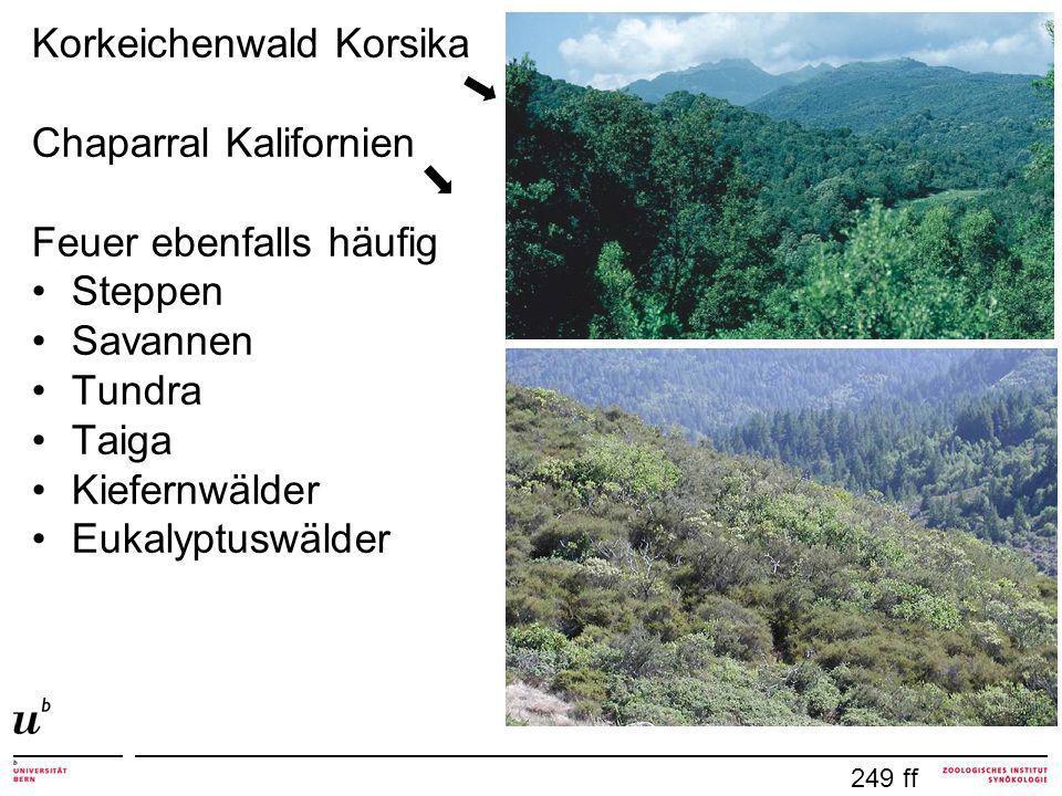 Korkeichenwald Korsika Chaparral Kalifornien Feuer ebenfalls häufig
